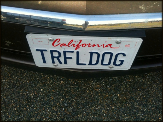 11 Truffle Dog License Plate