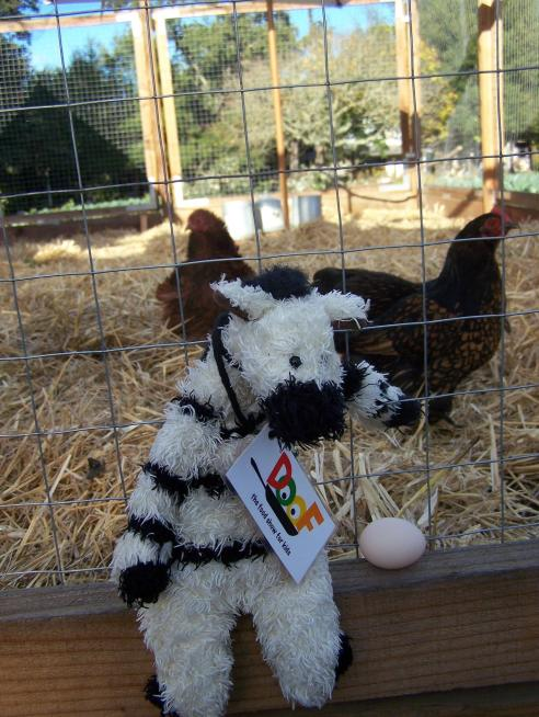 When I visited the French Laundry gardens, this chicken was nice enough to lay an egg just for me!