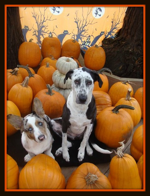 My buddies Spot and Rover give pumpkins a BIG paws up!