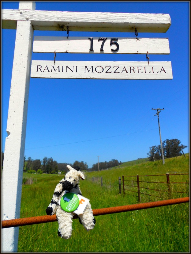 Ramini Mozzarella brings the flavors of Italy to California!
