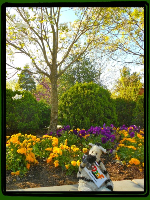 ZeBot in the Flower Gardens