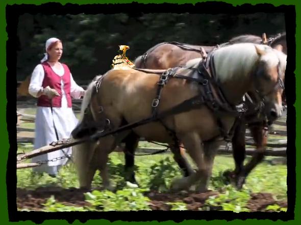 ZeBot Mount Vernon Plow