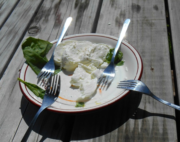 Plated Mozzarella on Picnic Table