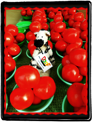 ZeBot Tomatoes in Green Bowls