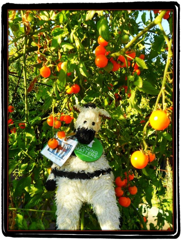 ZeBot Tomatoes Napa