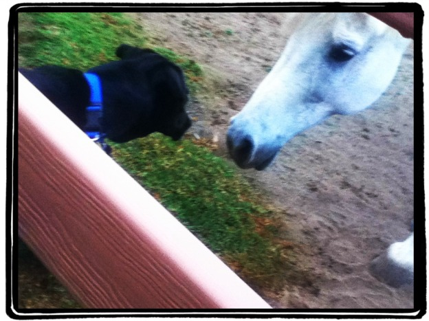 Close Encounters of the Canine-Equine Kind