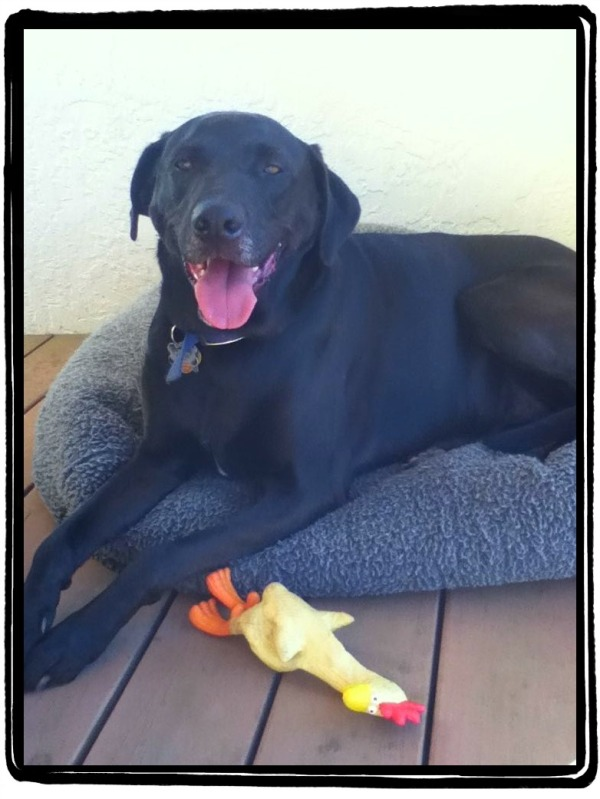 Miles with Chester's Rubber Chicken
