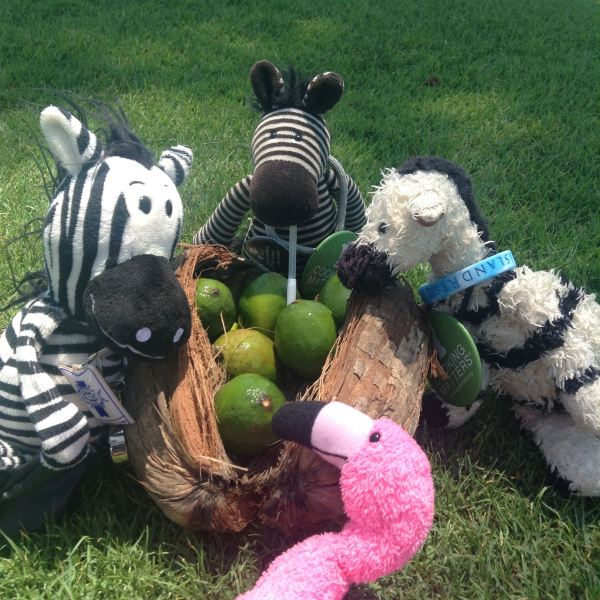 Zebra Beach Picnic on Captiva Golf Course