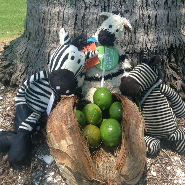 Zebras at ZeFoot of ZeCoconut Palm